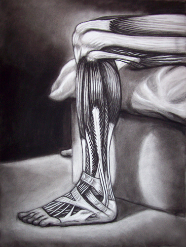 Image:  Copyright 2008, Jeff Curtis, All rights Reserved.  Art Anatomy Study - Charcoal and Conte' Crayon Drawing: Lower Leg and Foot Muscles.