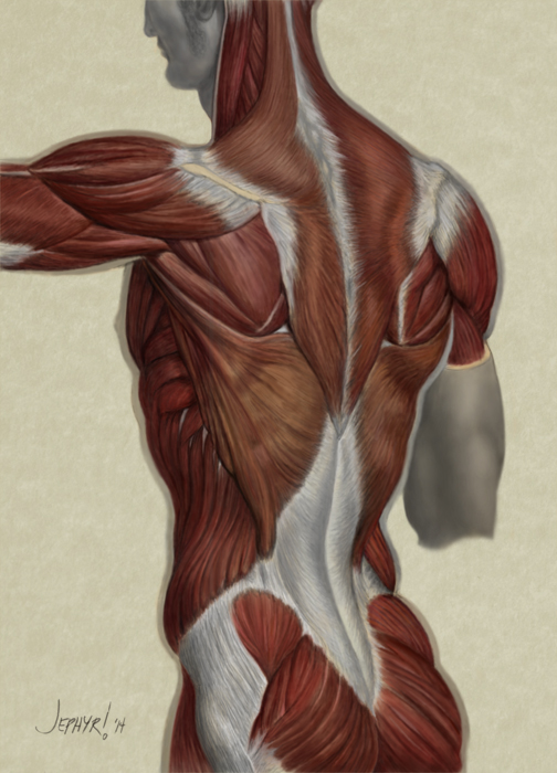 "Digital Painting ""Back Muscle Study"" - Copyright, 2014, Jephyr"