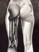 Please click on this image to see a larger version of this Charcoal Drawing:  Posterior Leg Muscle Study created by Artist Jeff Curtis for Mesa Community College, Art Anatomy.