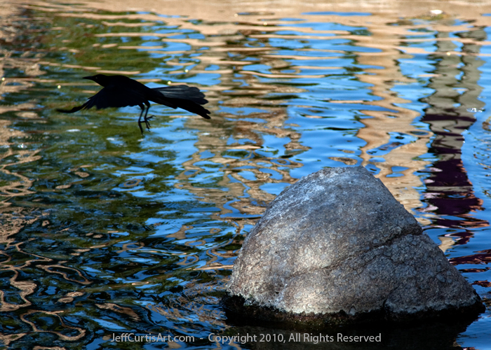 Photo:  Copyright 2010, Jeff Curtis, All Rights Reserved. Canon EOS-5D Mark II Photo. Taken at Freestone Park, Gilbert, Arizona